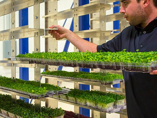 Conveyors for moving plants in greenhouse growing operations.