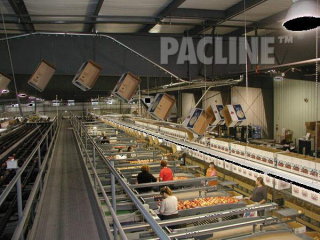 Transportation of empty boxes to apple packers utilizing overhead space with a PACLINE conveyor.