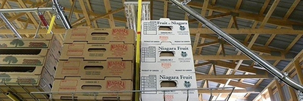 Boxes transported overhead in fruit packing shed.