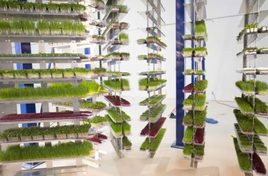 PACLINE I-Beam conveyor for patented high density vertical grow system.