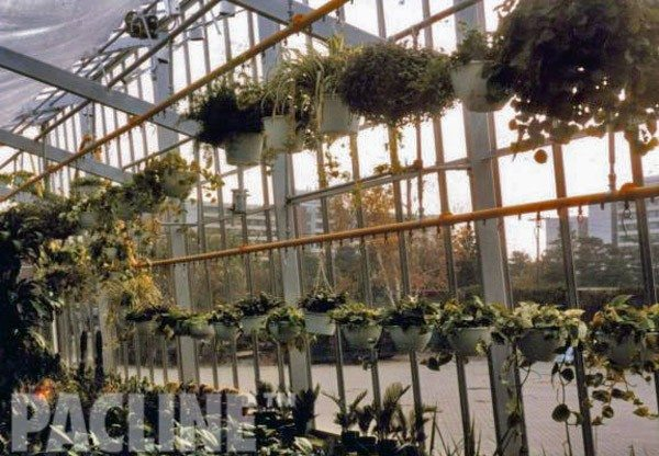 Overhead conveyor installed in greenhouse for flower display and automatic watering system.