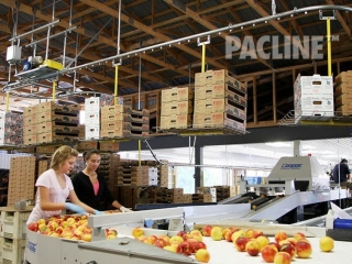 Overhead conveyor for delivery of empty cartons.