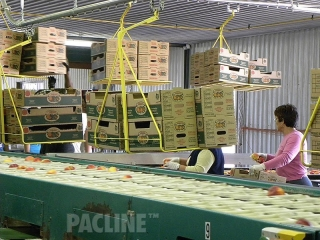 Various size cartons transported by overhead conveyor.