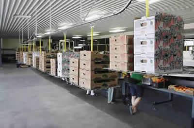 Overhead Conveyor Improves Carton Delivery