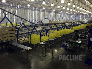Overhead conveyor delivers empty totes in fruit packing house.