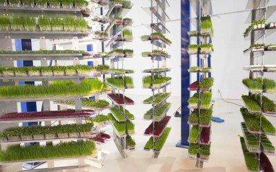 Overhead Conveyor for High Density Vertical Growing