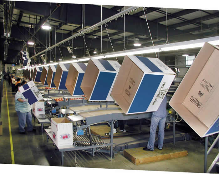 Apple packing house uses monorail overhead conveyor to deliver boxes