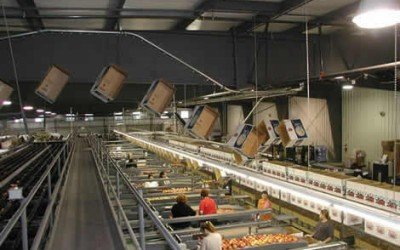 Overhead Conveyors For Apple Packing Operations