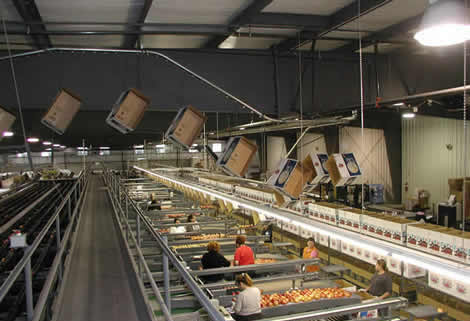 Conveying empty cartons over fruit packing equipment
