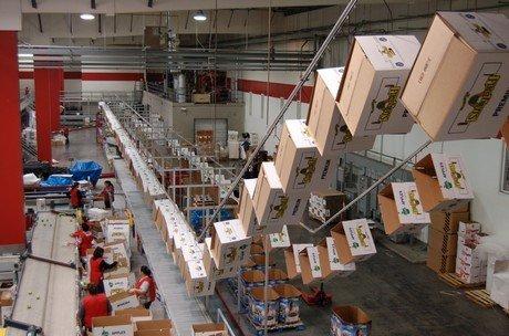 Fruit Packing Overhead Conveyor Frees Floor Space Pacline