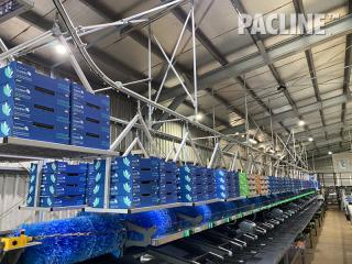 Produce Packing Overhead Conveyor Avocados